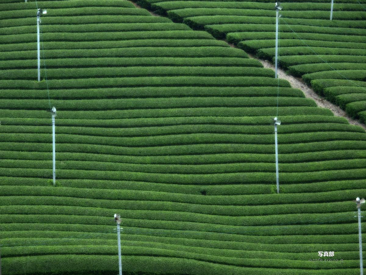 滋賀 オフ会 信楽茶畑 3_f0021869_14155047.jpg