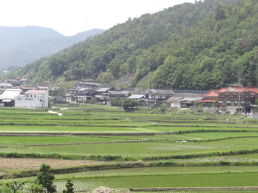 安浦の町は菖蒲(ショウブ)がいっぱい!_e0175370_15212969.jpg