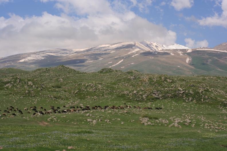 Armenia1_d0133581_1155578.jpg