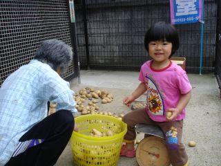 マコちゃん、じゃがいもを収穫!? 明日はお野菜販売の日!_e0166301_034673.jpg