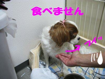 b0185323_18443926.jpg
