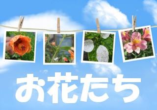 f0031546_21502578.jpg