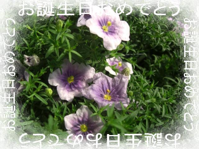f0031546_22112973.jpg