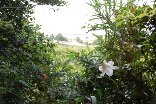 2009うみべの森「ササユリ便り第16便」…最終便_c0108460_20375317.jpg
