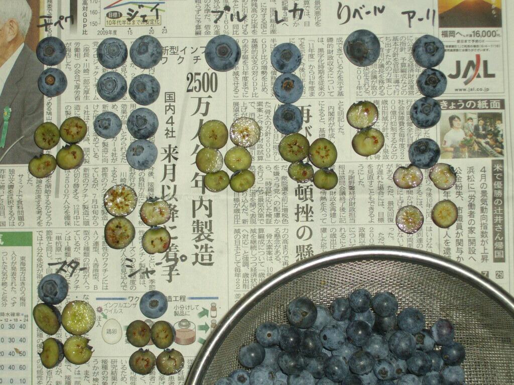 一昨日、収穫した品種のブルーベリーの果肉の色など_f0018078_15551184.jpg