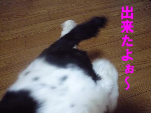 b0140680_056196.jpg