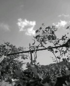f0100480_19401013.jpg