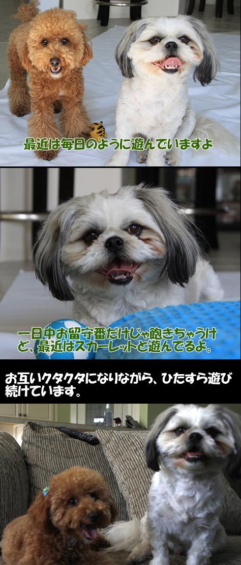 c0164491_159436.jpg