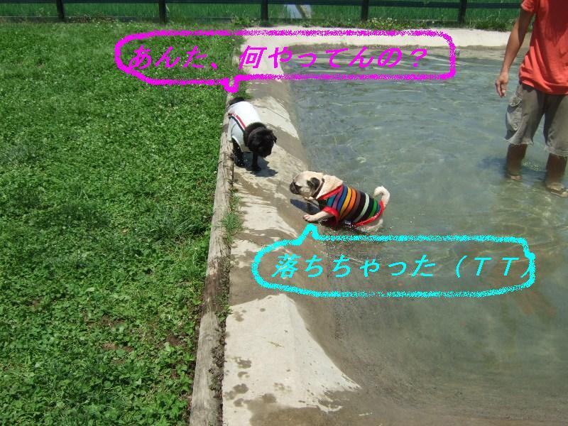 f0063791_925227.jpg