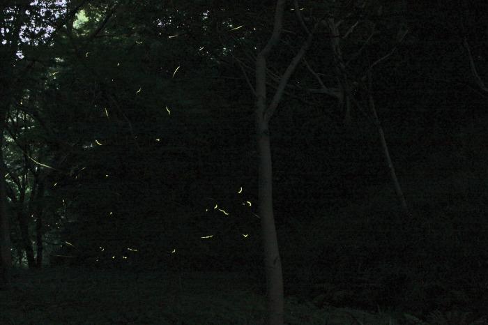 f0173817_1672386.jpg