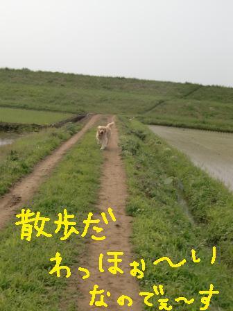f0176830_1736481.jpg