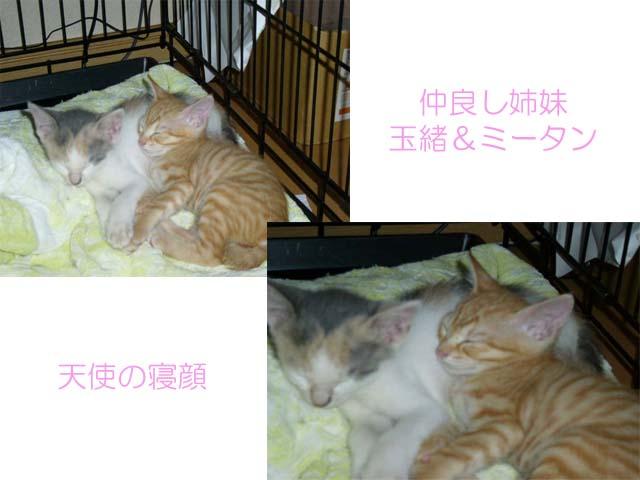天使の寝顔 _a0126743_2241955.jpg