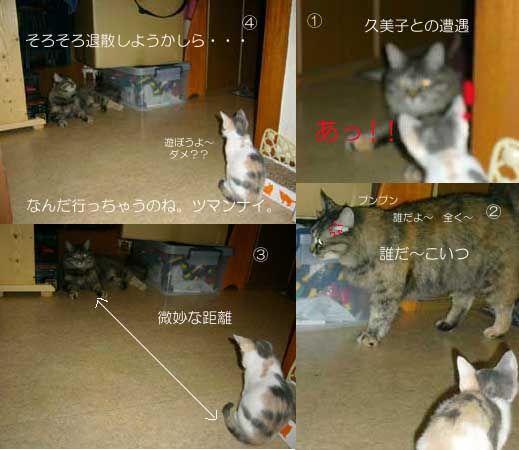 猫は苦手なの??  _a0126743_22483975.jpg