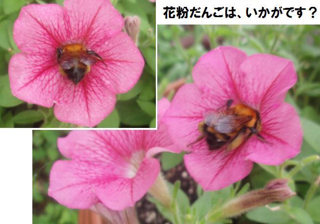 f0101679_820582.jpg