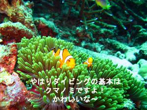 本日はお日柄もよく、ラチャヤイ島!!_f0144385_18235136.jpg