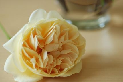 イングリッシュローズの花びら何枚?_d0129786_12252746.jpg
