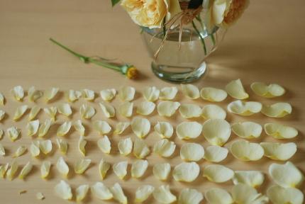 イングリッシュローズの花びら何枚?_d0129786_12373819.jpg