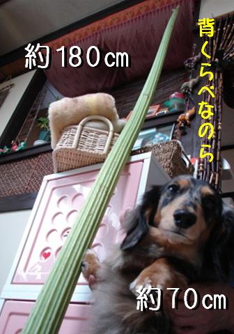 f0195891_1539561.jpg