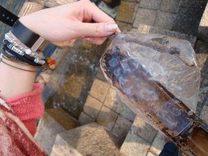 隅田川でくらげをつかまえました_e0149596_1453439.jpg