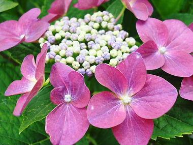 庭に植えたトマト_f0136398_19443598.jpg