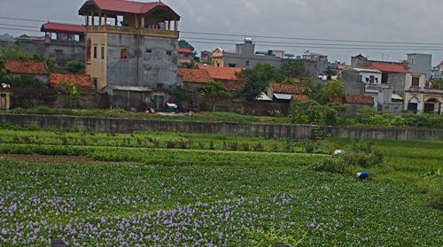 ベトナム、ハロン湾からバッチャン焼の町へ_d0148902_12451756.jpg
