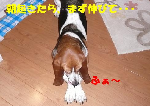 f0121712_1531771.jpg