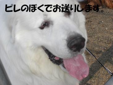 f0170713_942478.jpg
