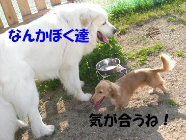 f0170713_9432292.jpg