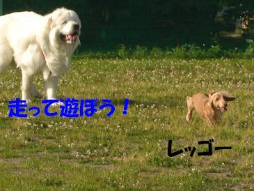 f0170713_9433932.jpg