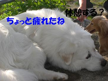 f0170713_9441327.jpg