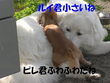 f0170713_9443199.jpg