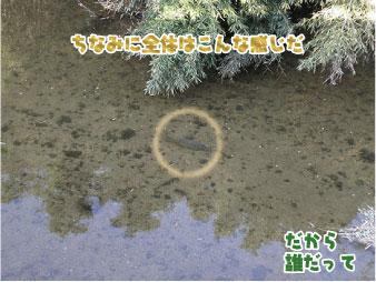 散歩部活動報告 「星のブランコ」つづき_e0142619_1214645.jpg