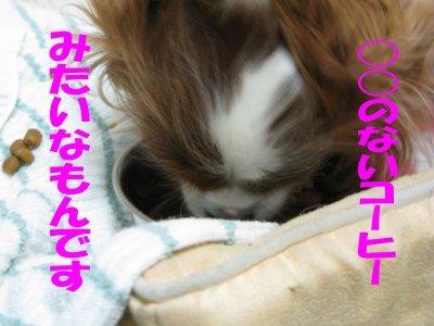 b0185323_17572622.jpg