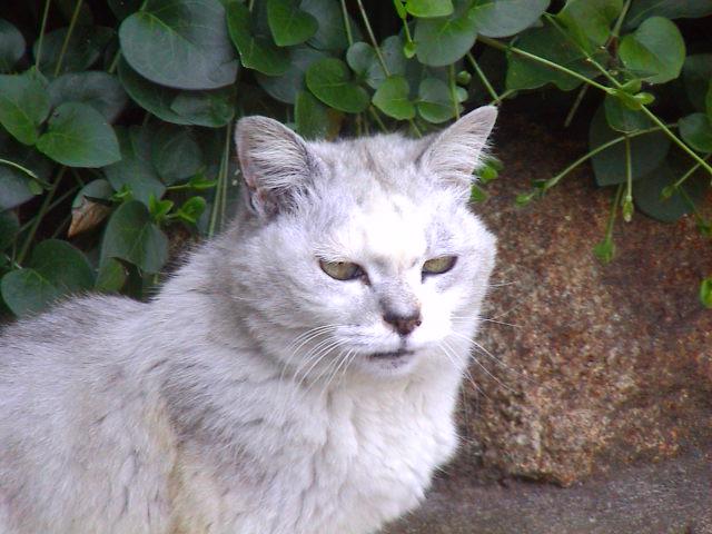 猫の気持ち。_e0060555_2127480.jpg