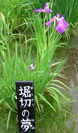 花菖蒲写真譜 その二_f0139963_23322624.jpg