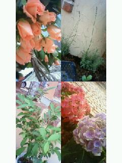 f0184566_8573197.jpg