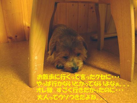 d0043478_22214012.jpg
