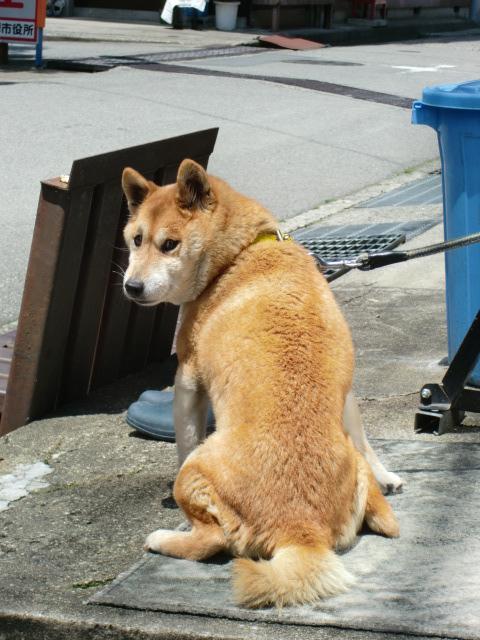 とき という名前の犬_c0027188_3174748.jpg