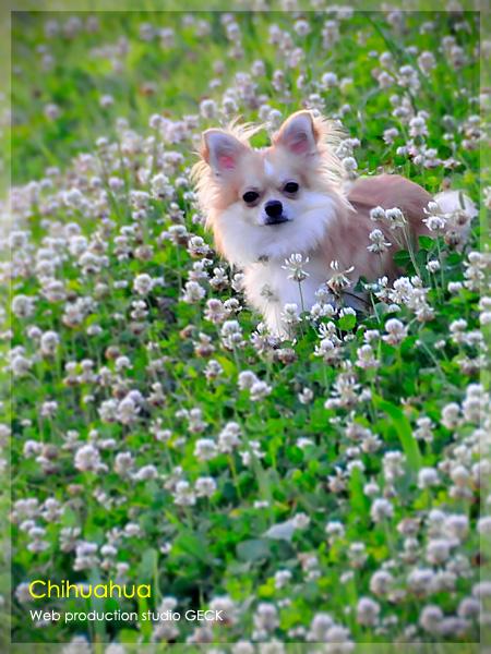 Chihuahua ・・・_d0147591_23572391.jpg