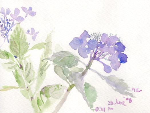 初夏の花 5_d0115092_7282768.jpg