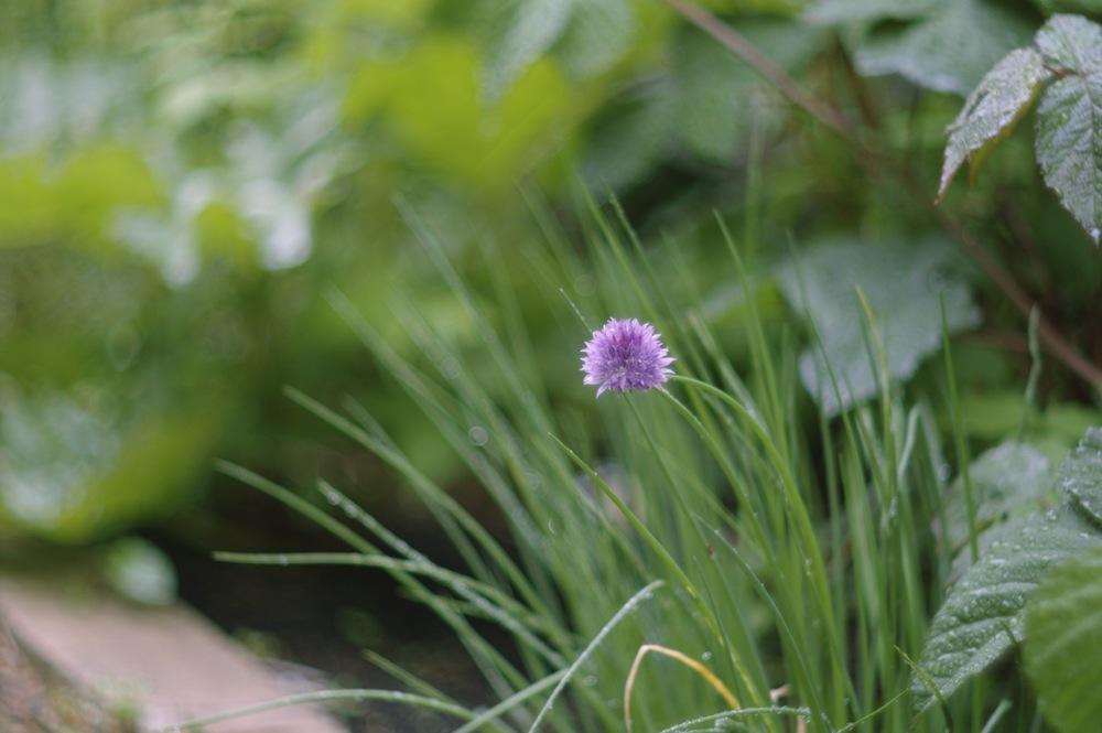 ズマレックスで雨の庭_f0042194_1916416.jpg