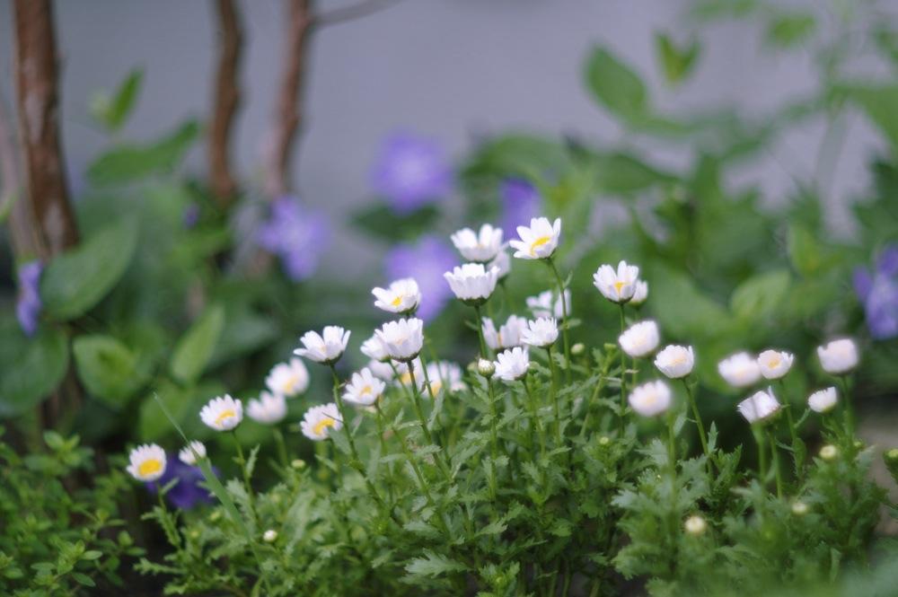 ズマレックスで雨の庭_f0042194_19171836.jpg