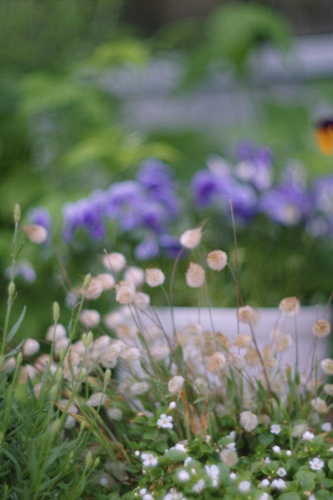 ズマレックスで雨の庭_f0042194_1917740.jpg