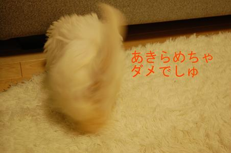 a0122619_050362.jpg