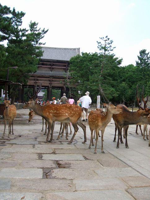 「盆休み1日目…奈良に行く」_d0133024_21395747.jpg