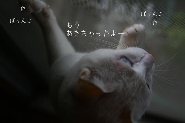 f0073833_17261635.jpg