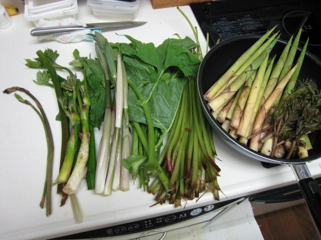 毎年恒例の有峰山菜ツアー!_e0121558_23455491.jpg