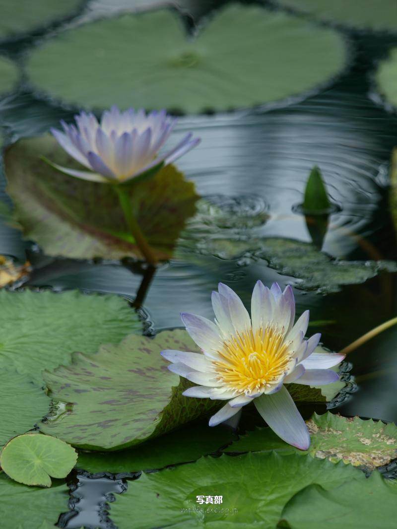 滋賀 オフ会 水生植物公園みずの森 1_f0021869_104877.jpg
