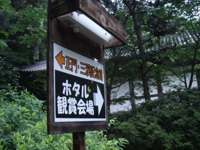 三渓園 蛍の夕べ_f0011179_382936.jpg