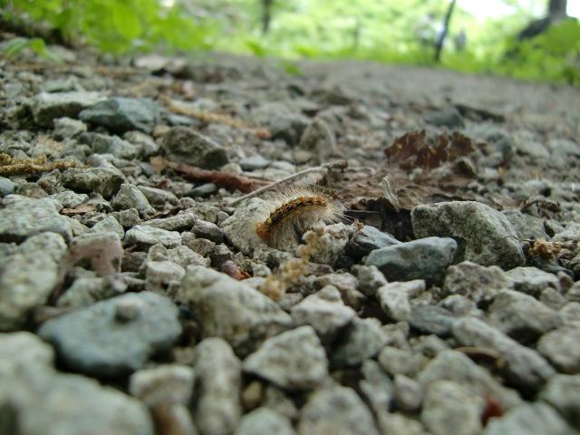 虫に、ちょっぴり蒸し暑さ_c0027188_3315170.jpg